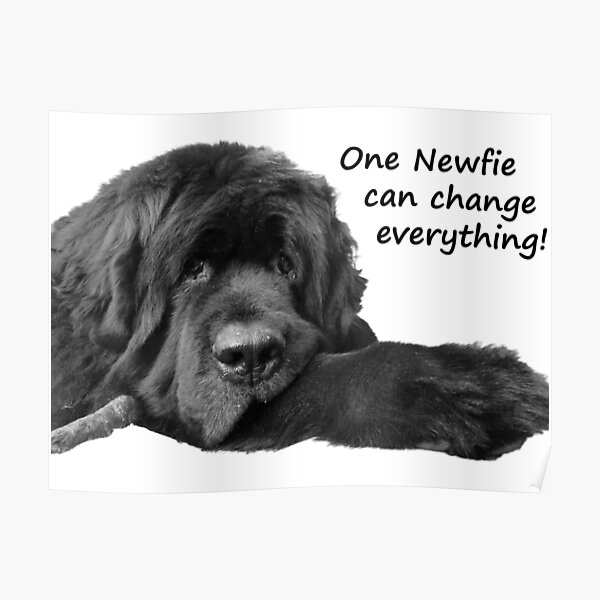 One Newfie Can Change Everything! Poster