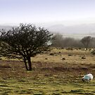 Dartmoor evening by SWEEPER