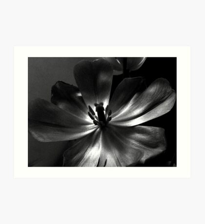 Black tulip. II. Art Print