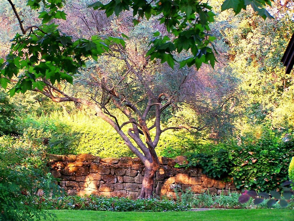 Olive Tree by Carrie Norberg