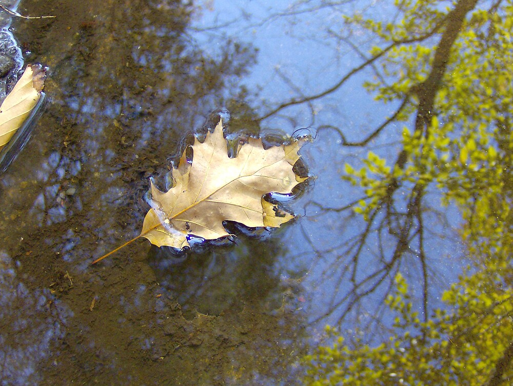Leaf in a Reflection by tfisher9553
