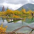 Indian Summer in the Rockies by Ursula Tillmann