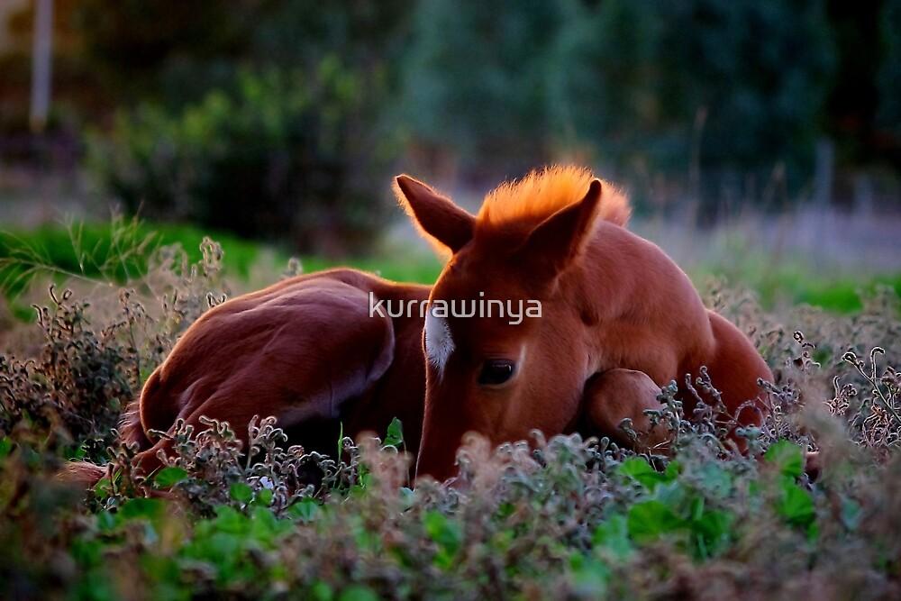 Precious little  by Penny Kittel