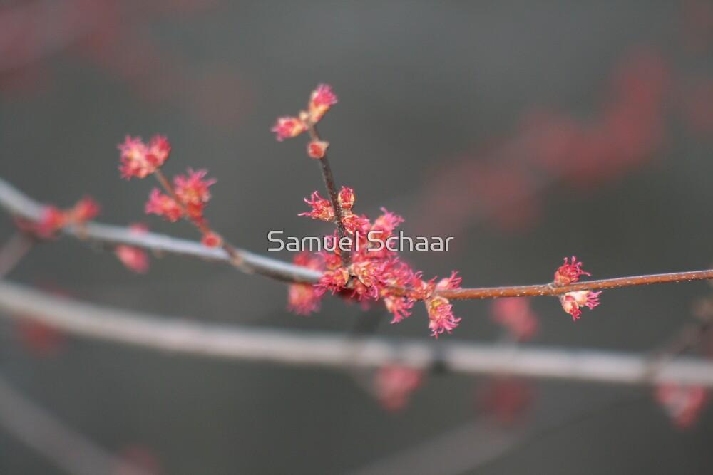 Spring Revelation by Samuel Schaar