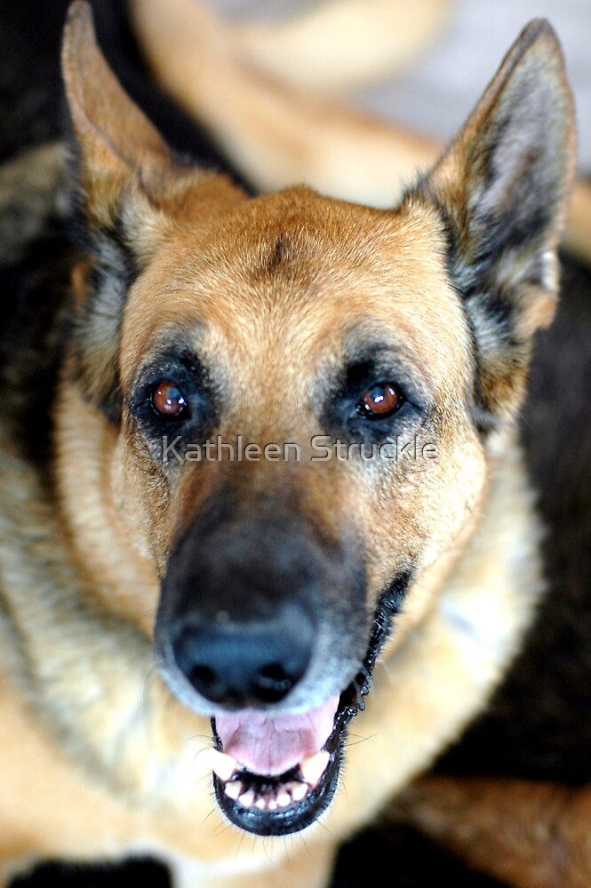 Rudy by Kathleen Struckle