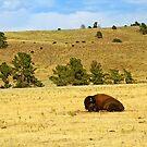 Tired Bull by Bill Morgenstern
