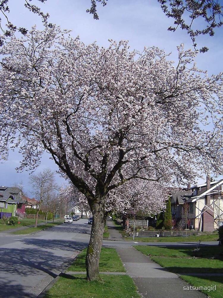 Cherry Blossom Tree  by satsumagirl
