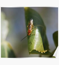 Weedy Field Insect Poster