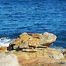 Klein Frog Rock by CrismanArt