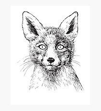 Fox portrait, ink drawing Photographic Print