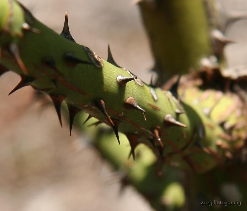 Thorn detail by zoejphotography