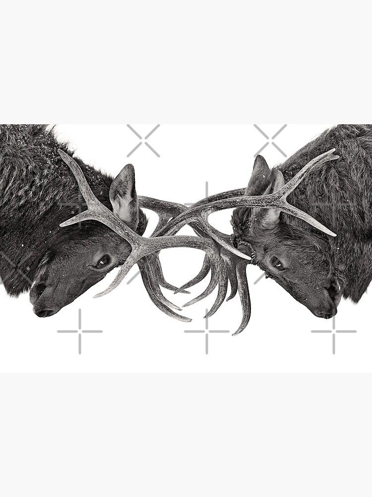 Eye to Eye - Elk fight by darby8
