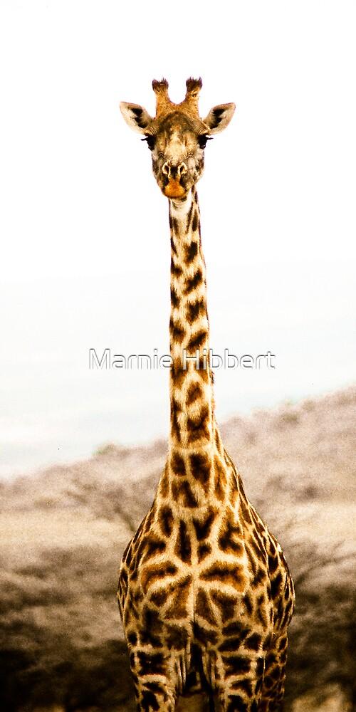 I'm tall but still a baby by Marnie Hibbert