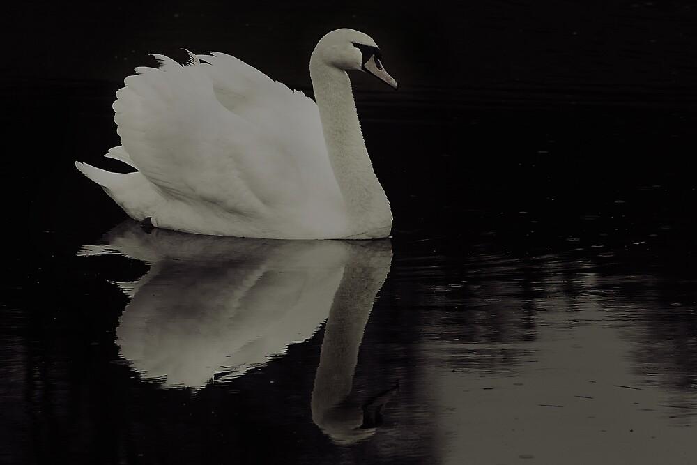 Black And White by KarenMcWhirter