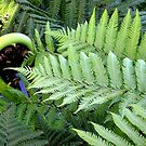New Zealand fern frond by Lois Patrick
