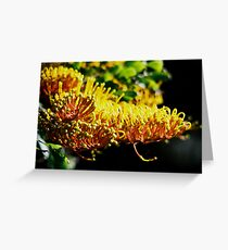 Grevillea gold Greeting Card