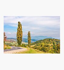 trees on a hill side near the mountain road Photographic Print