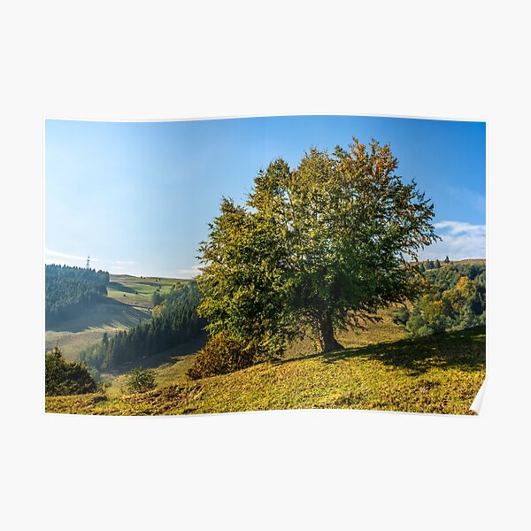 tree near valley in mountains Poster