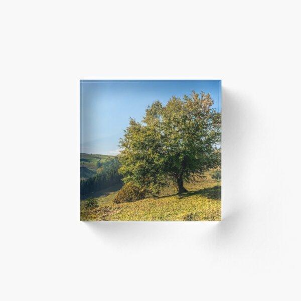 tree near valley in mountains Acrylic Block