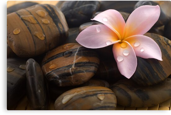 Frangipani and polished stone by afby