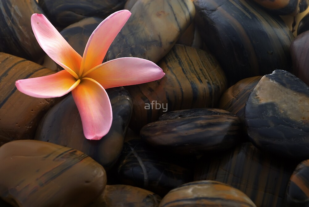 Frangipani and polished stone by afby