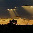 Streaks of light by Marie Strydom