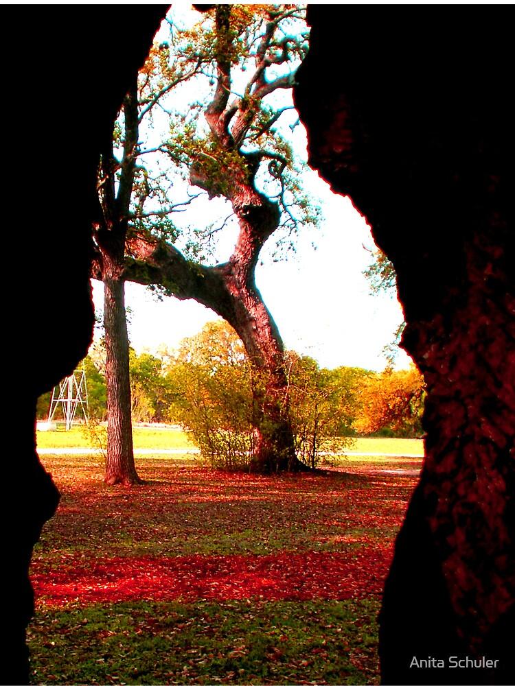 Through the eye of a Tree by Anita Schuler