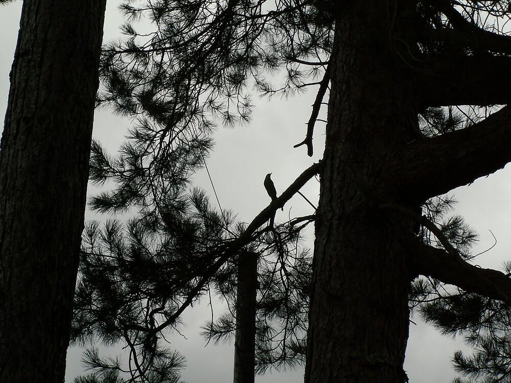 TREE BRANCH BIRD by john147