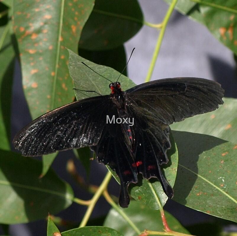 Butterfly 6 by Moxy