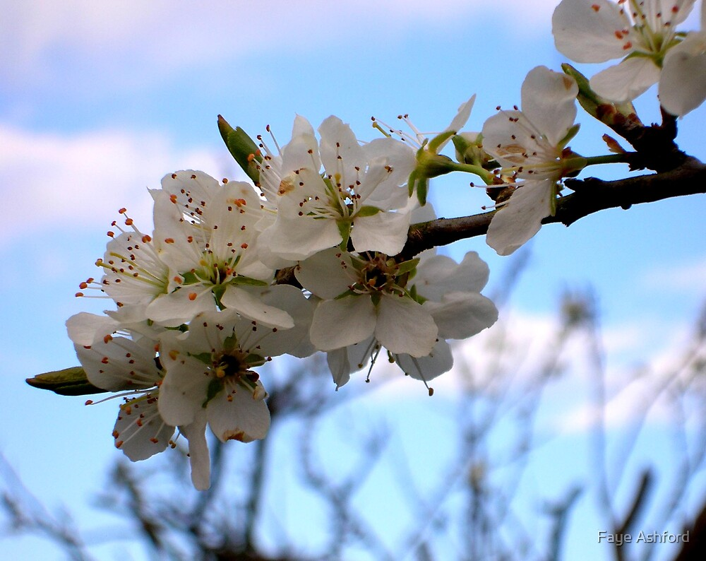 Spring by Faye Ashford