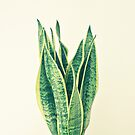 Snake Plant by Cassia Beck