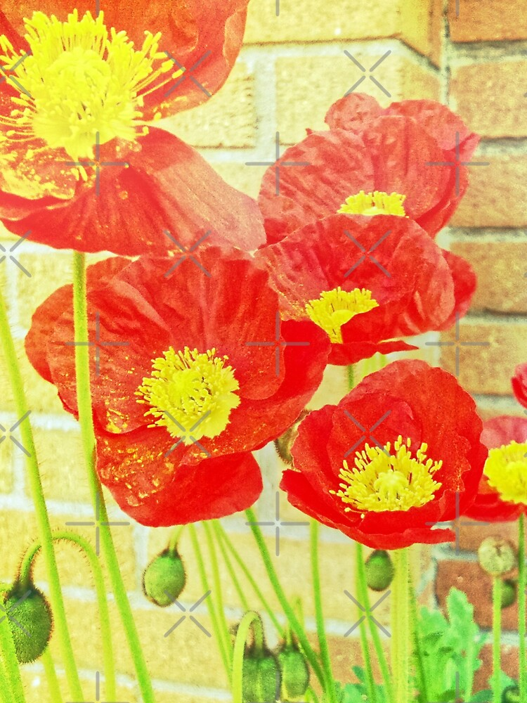 Poppyfied - Bright Yellow and Red Poppies - Flower Art Photo by OneDayArt