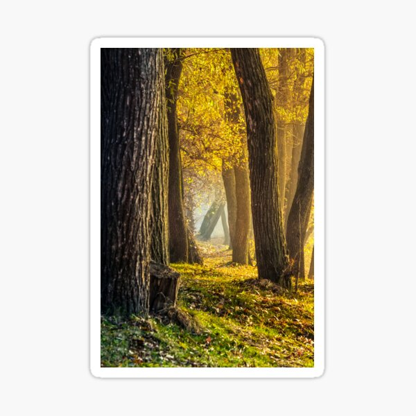 forest in foliage on sunny autumn day Sticker