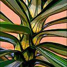 Beanstalk by John Lines