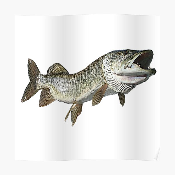 Toothy muskie Poster