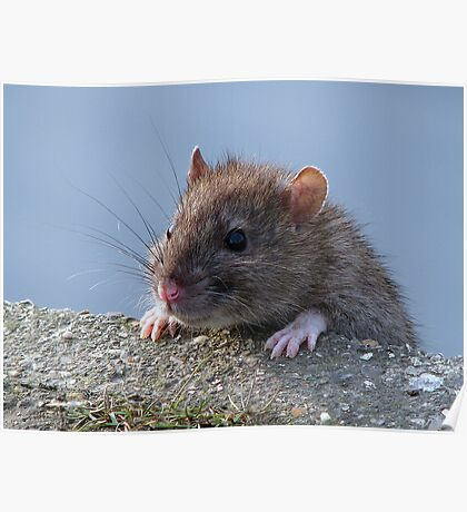 Ratty!!!! Poster