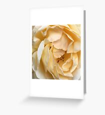Sleepy Rose Greeting Card