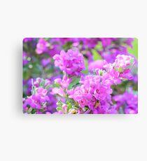 A Little Honey Bee Pollinating Purple Flowers  Canvas Print