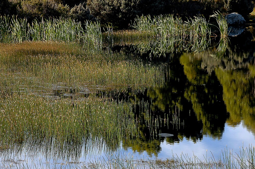 Reed reflections - Lake Peddar by Richard  Stanley