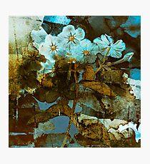 Fleurs en hiver/wintery floral Photographic Print