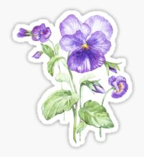 Pansy Sticker