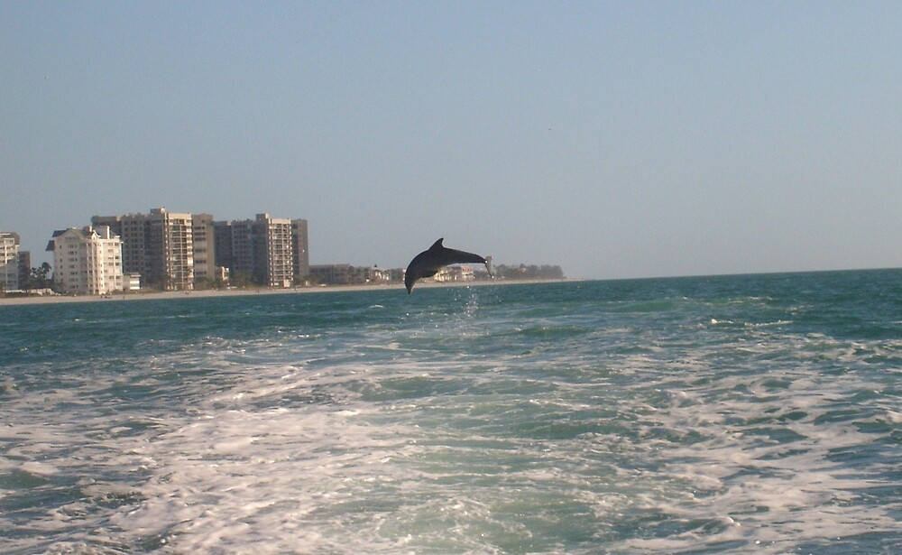 clearwater dolphin jumps by davehobbes