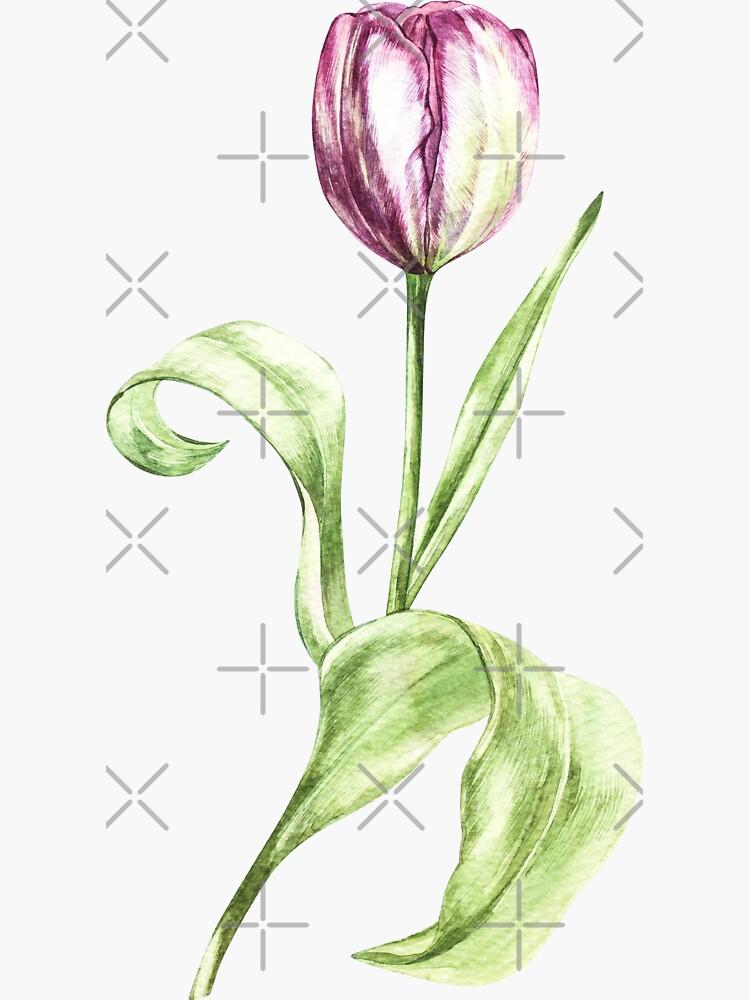 Tulip by Asetrova