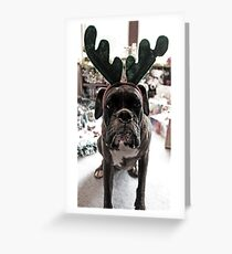 I'm Not A Reindeer!  -Boxer Dogs Series- Greeting Card