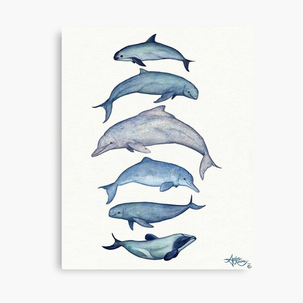 """Rare Cetaceans"" by artist Amber Marine ~ (Copyright 2017) Watercolor dolphins and porpoises, © 2017 - Vaquita, irrawaddy, maui's, humpback, finless, baiji Canvas Print"