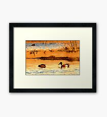 Northern Shoveler Ducks Framed Print