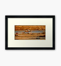 """It's a bird! It's a plane! It's a duck!"" Framed Print"