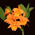 Alluring Orchid by vette
