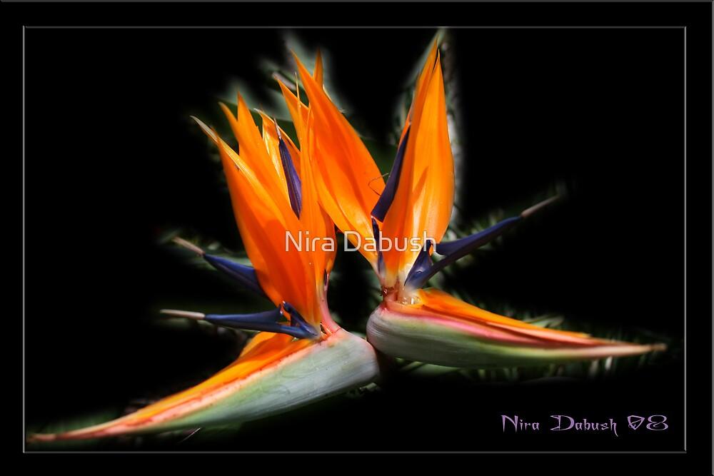 Elegance of Flames  by Nira Dabush