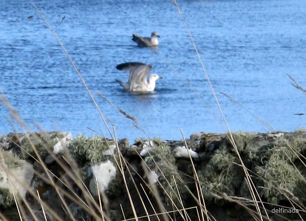 in the loch by delfinada